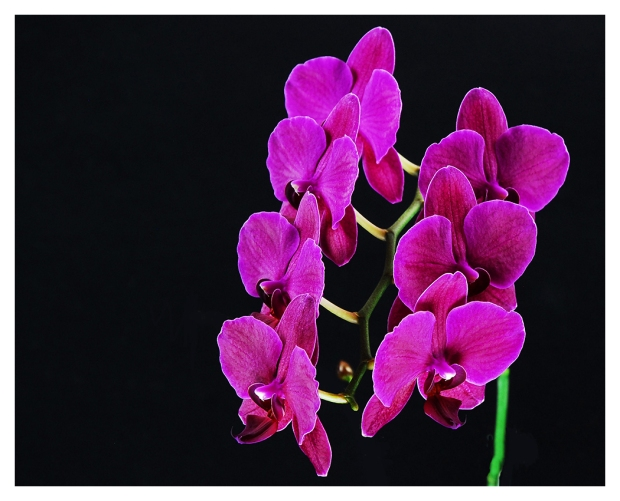 26G_14B13_Purple Orchid_0020-05F