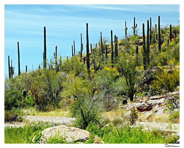 26G_NAT_Sabino Canyon_05D02-0094-04F