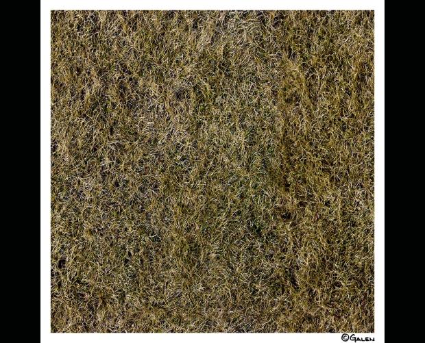 26g_brown-grass_16l14_010-04fx